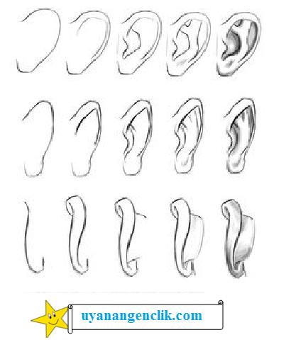 how to draw a cartoon ear